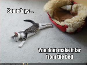 funny-pictures-cat-falls-asleep-by-