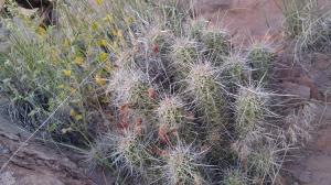 Cactus growing wild